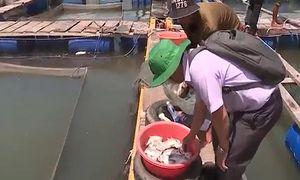 Người dân hoang mang vì chất lạ trên sông Chà Và