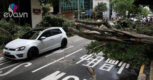 Sự tàn phá khủng khiếp của bão Hato ở Hongkong
