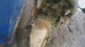 Thót tim với màn đùa giỡn với cá sấu bằng máy quay