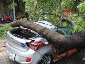 Cây xà cừ ngã đè ô tô 4 chỗ, 1 nữ hành khách bị thương
