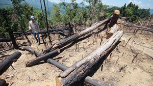 Buông lỏng quản lý, cả trăm ha rừng ở Quảng Nam bị tàn phá