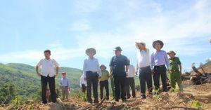 Phá rừng ở Bình Định: Phó Giám Công an tỉnh lên tiếng