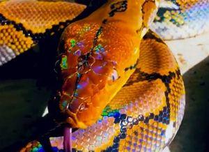 Cấu trúc da và lông giúp động vật trở nên óng ánh