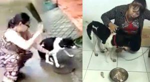 Chú chó Phú Quốc bị chặt chân có chủ mới và được phẫu thuật