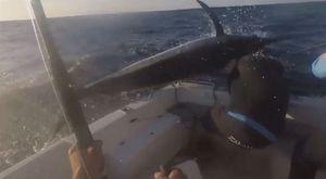 Ngư dân suýt mất mạng khi cá mũi kiếm bay sượt đầu