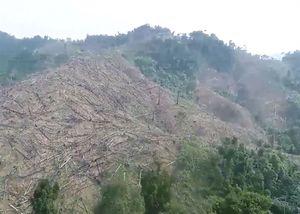 Rừng phòng hộ ở Quảng Nam trơ trụi nhìn từ trên cao