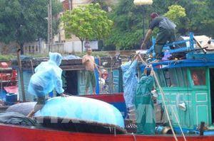 Quảng Ninh kêu gọi tàu thuyền về nơi neo đậu, tránh trú áp thấp nhiệt đới