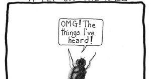 'A fly on the wall' có phải là 'một con ruồi trên tường'?