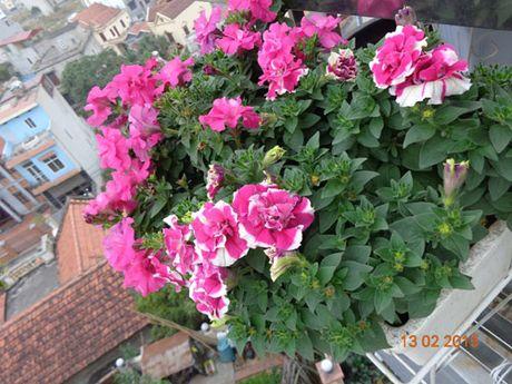 Tinh yeu 'an hoa, ngu cung hoa' cua co giao Quang Ninh - Anh 10