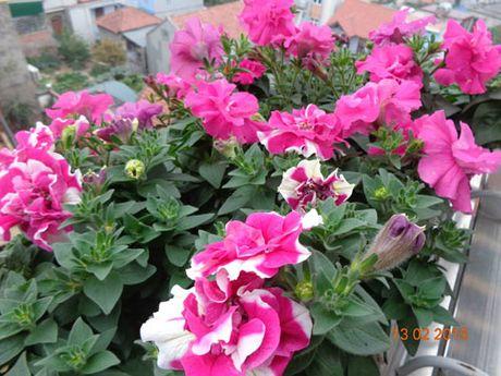 Tinh yeu 'an hoa, ngu cung hoa' cua co giao Quang Ninh - Anh 11