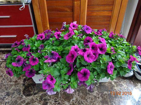 Tinh yeu 'an hoa, ngu cung hoa' cua co giao Quang Ninh - Anh 12