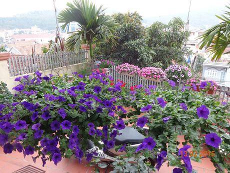 Tinh yeu 'an hoa, ngu cung hoa' cua co giao Quang Ninh - Anh 13