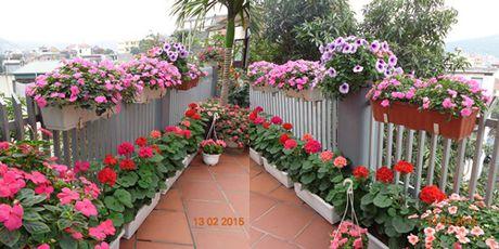 Tinh yeu 'an hoa, ngu cung hoa' cua co giao Quang Ninh - Anh 2