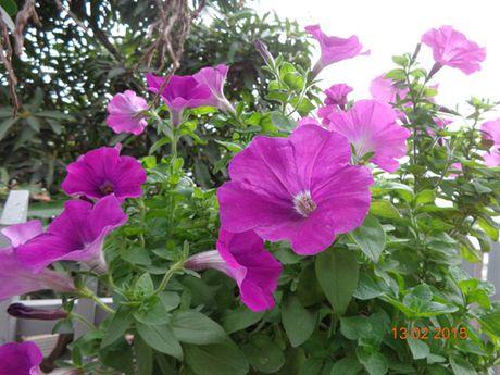 Tinh yeu 'an hoa, ngu cung hoa' cua co giao Quang Ninh - Anh 4
