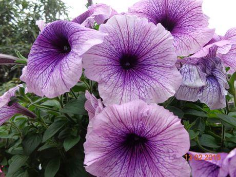 Tinh yeu 'an hoa, ngu cung hoa' cua co giao Quang Ninh - Anh 5
