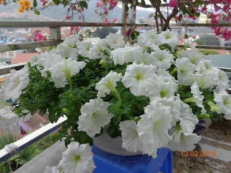 Tinh yeu 'an hoa, ngu cung hoa' cua co giao Quang Ninh - Anh 6