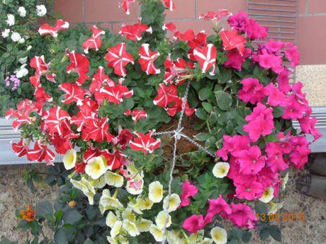 Tinh yeu 'an hoa, ngu cung hoa' cua co giao Quang Ninh - Anh 7