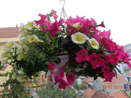 Tinh yeu 'an hoa, ngu cung hoa' cua co giao Quang Ninh - Anh 8