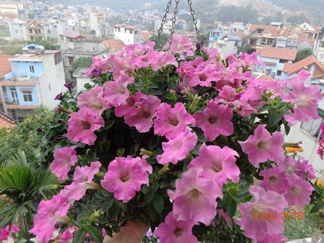 Tinh yeu 'an hoa, ngu cung hoa' cua co giao Quang Ninh - Anh 9