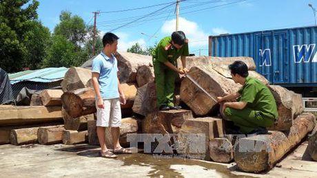 Khoi to 6 doi tuong lam gia ho so van chuyen go lau - Anh 1