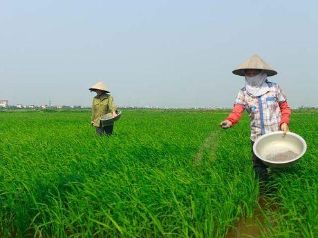 NPK-S Lam Thao duoc ua chuong o que lua - Anh 1