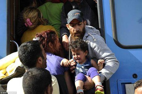 Di dan Syria, Afghanistan au da dam mau, tranh nhau len tau - Anh 11