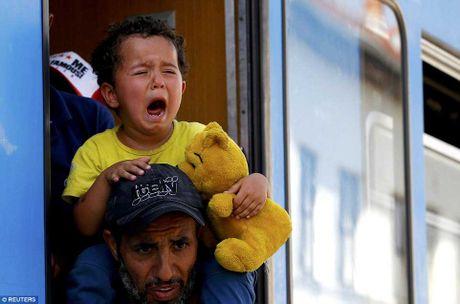 Di dan Syria, Afghanistan au da dam mau, tranh nhau len tau - Anh 9
