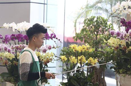 Hoa lan nhap ngoai don Tet gia tram trieu van dat khach - Anh 10