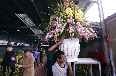 Hoa lan nhap ngoai don Tet gia tram trieu van dat khach - Anh 13