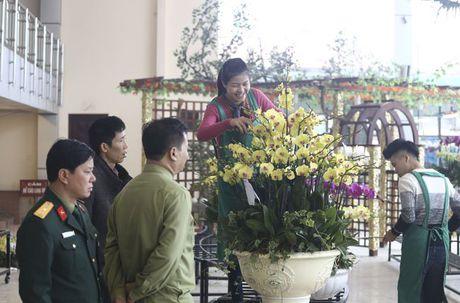 Hoa lan nhap ngoai don Tet gia tram trieu van dat khach - Anh 4