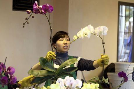 Hoa lan nhap ngoai don Tet gia tram trieu van dat khach - Anh 5