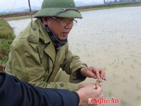 Quynh Luu chong ret cho cay trong, vat nuoi - Anh 1