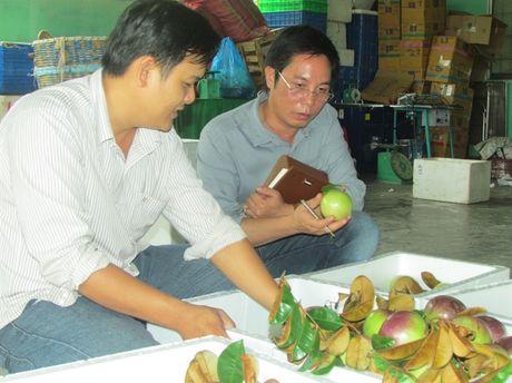 Nguy co xoa so vu sua Lo Ren Vinh Kim - Anh 2