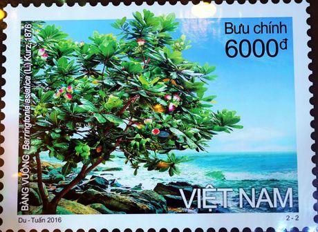 Can canh bo tem 'Bang vuong' ruc ro - Anh 5