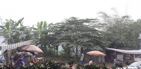 Kinh hoang 'pho hoa qua tron ruoi nhang' giua long Ha Noi - Anh 3