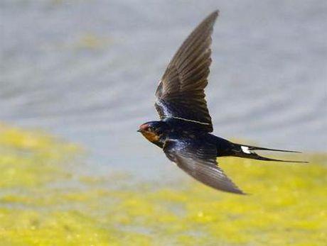 Kham pha hay ho ve loai chim en quen thuoc - Anh 1