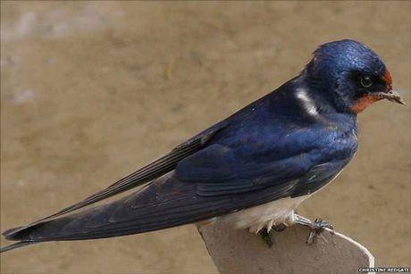 Kham pha hay ho ve loai chim en quen thuoc - Anh 2