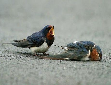 Kham pha hay ho ve loai chim en quen thuoc - Anh 3