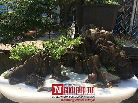 Gap nguoi thoi hon dieu khac da vao nghe thuat bonsai tai Da Nang - Anh 9