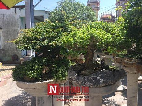 Gap nguoi thoi hon dieu khac da vao nghe thuat bonsai tai Da Nang - Anh 10