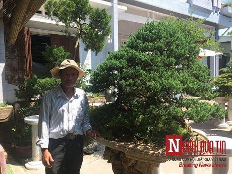 Gap nguoi thoi hon dieu khac da vao nghe thuat bonsai tai Da Nang - Anh 3