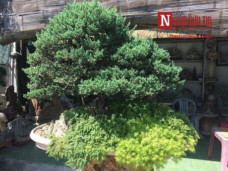 Gap nguoi thoi hon dieu khac da vao nghe thuat bonsai tai Da Nang - Anh 7