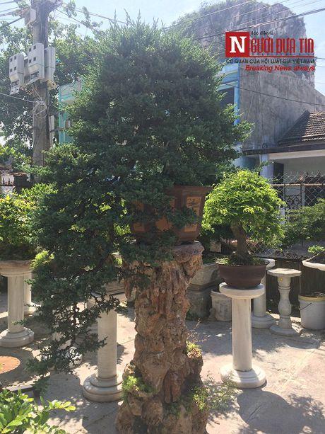 Gap nguoi thoi hon dieu khac da vao nghe thuat bonsai tai Da Nang - Anh 8