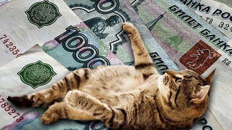 Meo nhan luong 400 nghin rup/nam - Anh 1