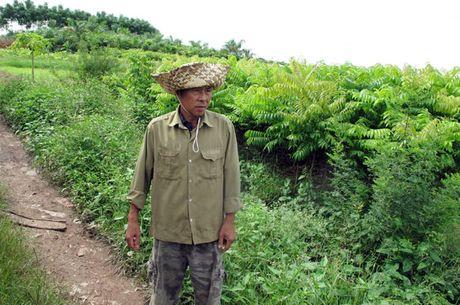 Hung Yen: Mot nong dan hang chuc lan len toa xin duoc xet xu - Anh 1