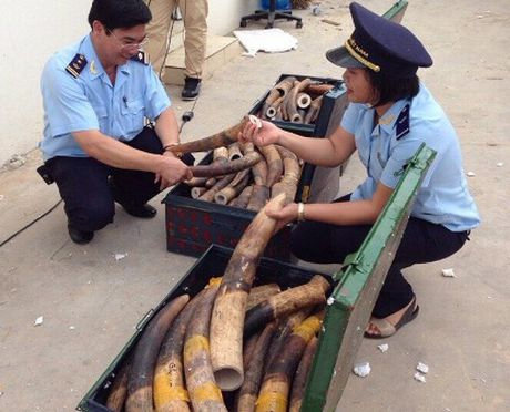 Bieu duong thanh tich bat giu 309 kg nga voi cua Tong cuc Hai quan - Anh 1