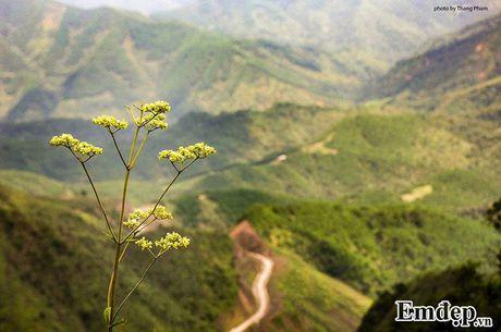 Vuot 'song lung khung long' trek moc 1305 nhu dan phuot chuyen nghiep - Anh 3