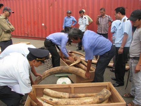 Pho Thu tuong khen thuong vu bat giu 309kg nga voi - Anh 1