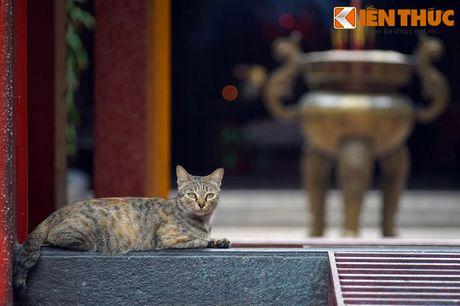 Kham pha hoi quan dac biet cua nguoi Hoa Cho Lon - Anh 11