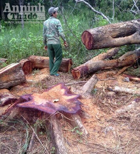 Bat nhom doi tuong khai thac go rung trai phep trong khu bao ton - Anh 1